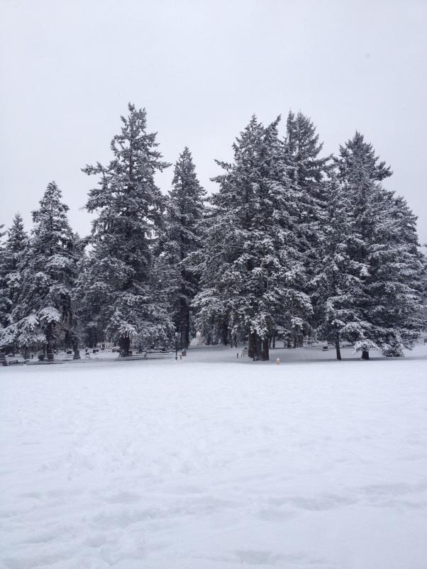 My snowy campus!
